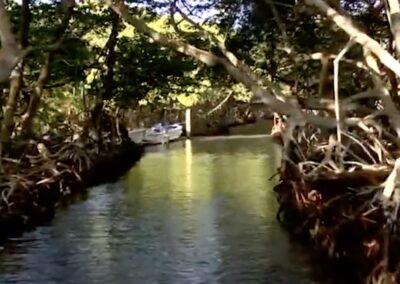 Los manglares, el otro tesoro de Roatán / 800 mascarillas para sobrevivir